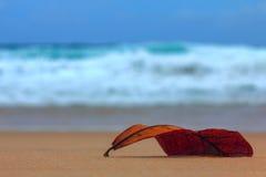 Spadać pomarańczowy szkotowy lying on the beach na plaży obraz stock