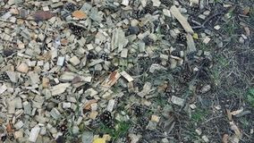 Spadać rożki na suchych igłach, ziemi powierzchnia w lesie zbiory