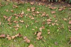 Spadać susi liście na trawie fotografia royalty free