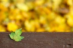 Spadać zielony urlop przy ławką Obraz Royalty Free