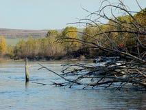 Spadać drzewa na Danube zdjęcie royalty free