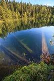 Spadać drzewa podwodni przy lasowym jeziorem Zdjęcia Stock