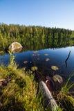 Spadać drzewa podwodni przy lasowym jeziorem Obraz Royalty Free