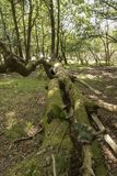 Spadać Drzewny Nowy Lasowy Hampshire UK Fotografia Stock