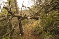 Spadać drzewo Zdjęcia Royalty Free