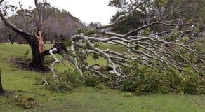 Spadać drzewo, burzy szkoda Zdjęcia Stock