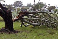 Spadać drzewo, burzy szkoda Zdjęcia Royalty Free