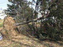 Spadać drzewo od wiatrowej burzy szkody Zdjęcie Royalty Free