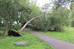 Spadać drzewo po Huragan Zdjęcia Royalty Free