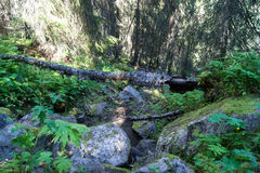 Spadać drzewo puszka wzgórze Zdjęcie Royalty Free