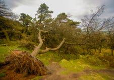 Spadać drzewo w angielskiej wsi Obraz Stock