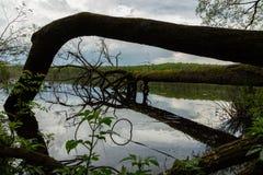 Spada? drzewo w jeziorze obrazy royalty free