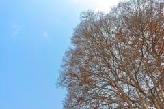 Spada drzewo z jasnym niebem Fotografia Royalty Free