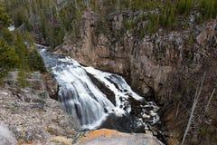 spadać gibon Yellowstone Zdjęcia Royalty Free