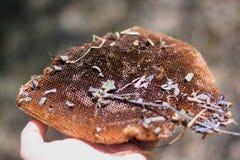 Spadać Honeycomb Obraz Royalty Free
