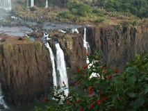 spada iguassu brazylijskie Fotografia Royalty Free