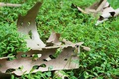 Spadać jaty Drzewna barkentyna Obrazy Royalty Free