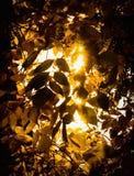 Spada jesień liści klonowych naturalny tło obraz royalty free