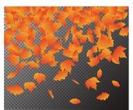 Spada jesień liści wektor, Odizolowywający na przejrzystym tle Sezonowy Karciany szablon dla twój d ilustracja wektor