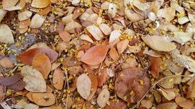 Spada kwiat w jesieni i liść zdjęcia royalty free
