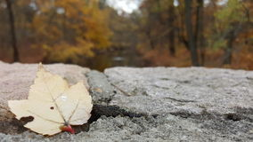 Spada liść rzeką Obraz Royalty Free