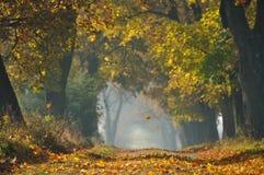 Spada liść w jesieni obraz stock