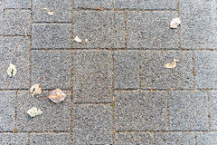 Spada liście na textured drodze Obrazy Royalty Free