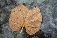 Spada liście z wodnymi kroplami Fotografia Stock