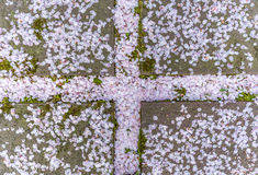 Spada Sakura liście Fotografia Royalty Free