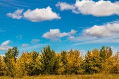 Spada w wszystko ono ` s colourful chwała, Calgary, Alberta, Kanada obrazy royalty free