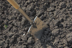 A spade digging the soil. A spade in the act of digging into the soil royalty free stock image