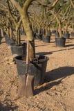 Spade in een boomkwekerij Royalty-vrije Stock Fotografie