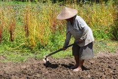 Spade för bonde för gammal kvinna hållande på fältet bali indonesia arkivfoton