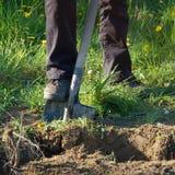 Spade gardening Royalty Free Stock Image