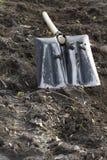 Spade på gräsmattan. Arkivbild