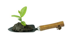 Spade plant Royalty Free Stock Photography