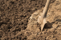 Spade or shovel in soil. Spade or shovel, embedded in brown earth or soil Royalty Free Stock Photos