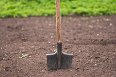 Spade in the soil. Old garden shovel is ready for use Stock Photo