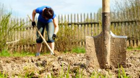 Spade sticking into the earth with a woman working on the background Royalty Free Stock Images
