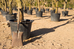 Spade in a tree nursery Stock Images