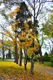 Spadek alei parkowy widok Zdjęcie Royalty Free