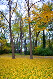 Spadek alei parkowy widok Fotografia Royalty Free