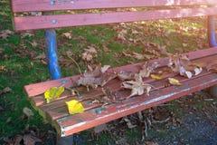 Spadek ławka w parku Zdjęcia Royalty Free