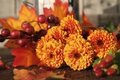 Spadek chryzantemy kwiaty Zdjęcie Royalty Free