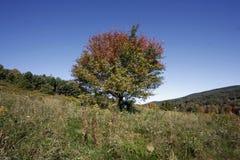 spadek drzewo Obrazy Royalty Free