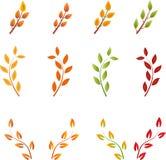 Spadek gałąź, jesieni drzewa, liści wektory Obraz Stock