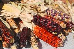 Spadek Indiańska kukurudza Fotografia Royalty Free
