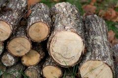 Spadek jesieni drewna stos fotografia royalty free