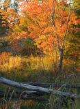Spadek jesieni koloru drzew tarcicy ogrodzenia Szary krajobraz Zdjęcia Royalty Free