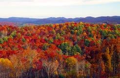 Spadek kolory Fotografia Royalty Free